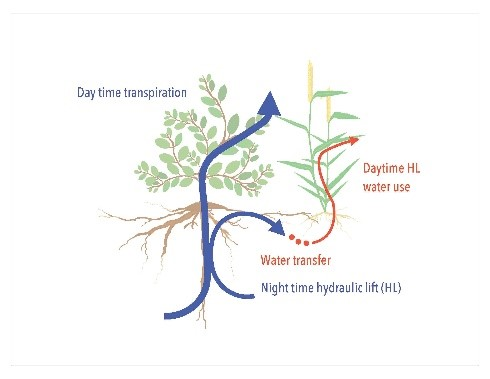 Bioirrigation
