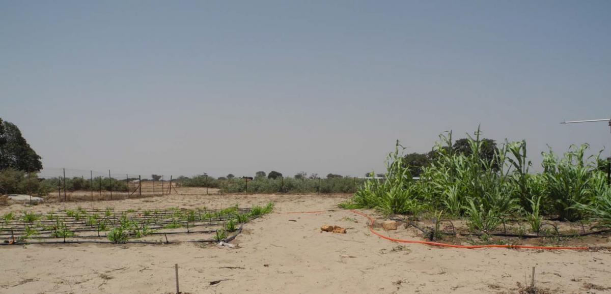 drought experiment